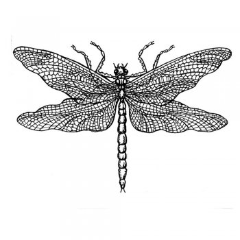 Crafty Individuals CI-033 - 'Dragonfly Drawing' Art Rubber Stamp, 60mm x 40mm