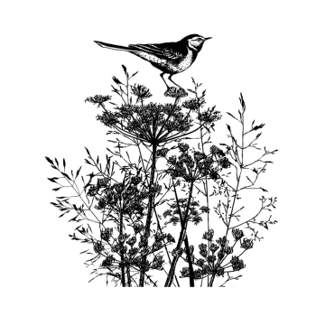 Crafty Individuals CI-495 - 'Perching Pied Wagtail', 87mm x 97mm