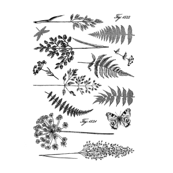 Crafty Individuals CI-207 - 'Ferns and Grasses Reissued' Art Rubber Stamps, 96mm x 137mm