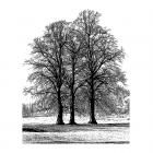 CI-453 - 'Tree Trio' Art Rubber Stamp, 77mm x 97mm