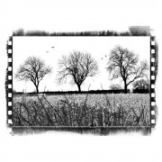 CI-197 - 'Three Winter Trees' Art Rubber Stamp, 90mm x 65mm