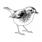 CI-456 - 'Sweet Robin Redbreast' Art Rubber Stamp, 71mm x 58mm