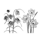 CI-488 - 'Spring Flowers' Art Rubber Stamps, 137mm x 96mm