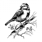 CI-505 - 'Bluebird with Branch and Berries' Art Rubber Stamp, 80mm x 98mm